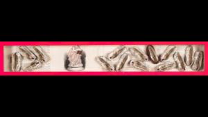 Ronald Ceuppens - 15 schoentjes